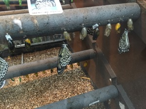 butterflies at bristol zoo